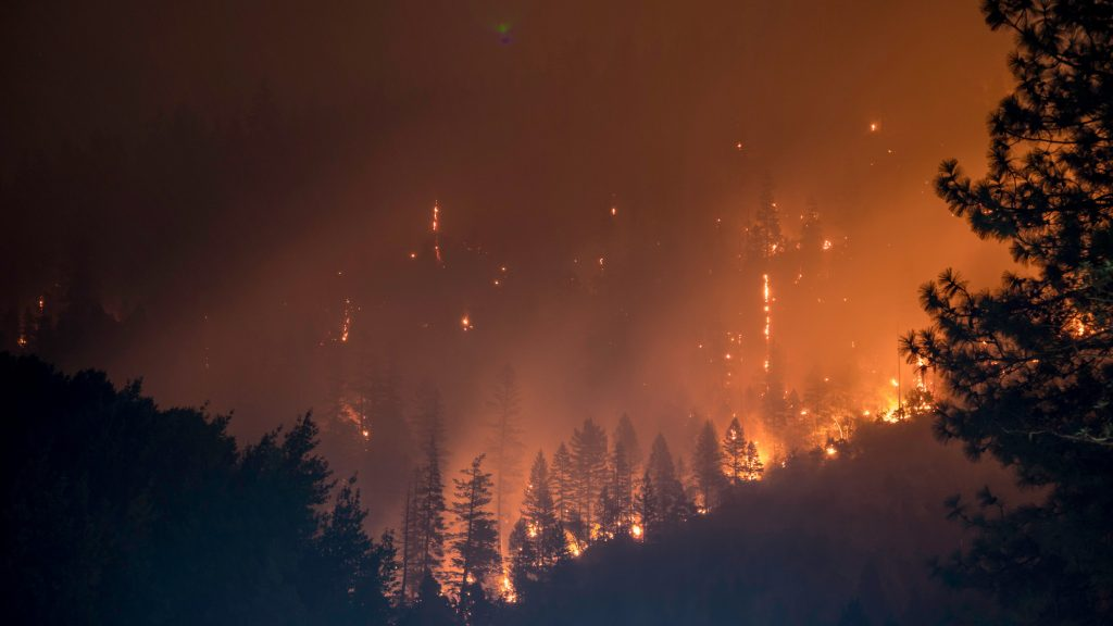 Forest fire as an example of climate change effects